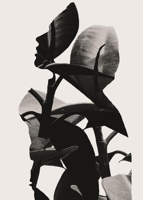 "Digitale Fotocollage ""leaves"" von Hannes Stolpe. Foto: ©Hannes Stolpe"