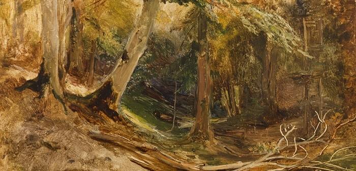 Waldinneres mit abgebrochenen Ästen